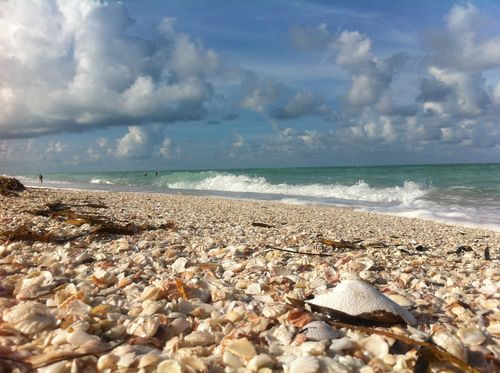 Longboat Key Styrofoam Litter that looks like Shell