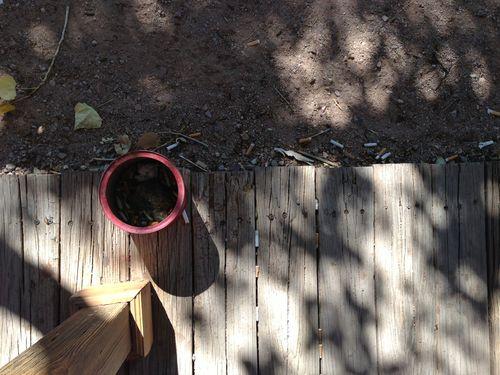 Tombstone cig butts near ashtray on wooden sidewalk
