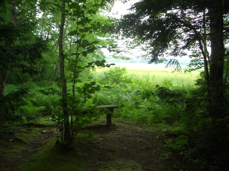 Bench overlooking bog at Audubon sculpture garden